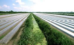 Пленка для сельского хозяйства